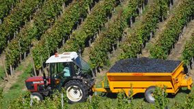 Truck loaded with freshly picked grapes. On wineyard, Bordeaux, France stock video