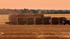Truck loaded with hay bales crossing a field. Manitoba, Canada.Big orange truck loaded with hay bales crossing a field. At speed stock video footage