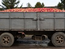 truck lorry full of red ripe apples royalty free stock photo