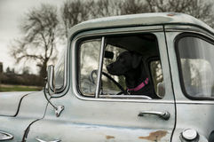 In the truck Royalty Free Stock Photography