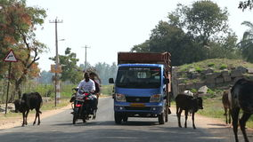 Truck and motorcycle slowly driving between cows walking on the road in Hampi. HAMPI, INDIA - 28 JANUARY 2015: Truck and motorcycle slowly driving between cows stock footage