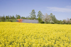 Truck passing yellow canole field, Motion blur. Stock Photography