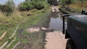Truck rides over mire in Botswana. Truck rides over mire on the road during safari stock video
