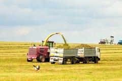 Truck taking the grain Stock Photos