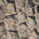 Truck tracks in sand. / dirt with some weeds Royalty Free Stock Photo
