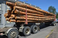 Truck trailer with logs in Albany, Oregon. This is a trailer carrying freshly cut logs in Albany, Oregon Royalty Free Stock Photos