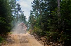 Truck transporting timber in the forest. Truck transporting wood from a pine tree forest in Bulgaria Stock Images