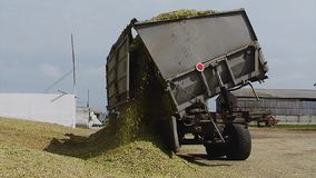 Truck Unloads Harvested for Silage Maize on the Farm stock video footage