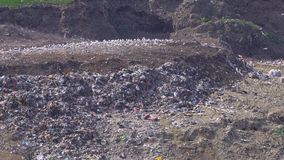 A truck unloads trash at a large dump near a cemetery where many birds fly.  stock footage