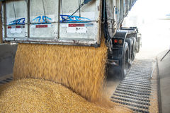 Truck upload corn. São Jose, SC, Brazil, September 24, 2009. Truck makes a corn dump at an animal feed factory in Santa Catarina State royalty free stock photos