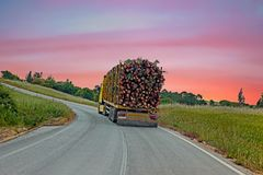 Truck with wood driving in the countryside from Portugal Royalty Free Stock Image