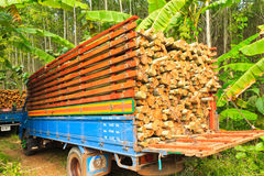 Truck wood Eucalyptus Stock Photography