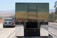 Truckful of grapefruit. Rear view of a semi-truck on the freeway hauling grapefruit Royalty Free Stock Image