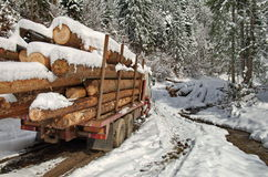 In the forest. Deforestation. Truckload of logs Stock Photo