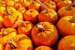 A Truckload of Ripe Pumpkins Royalty Free Stock Photography