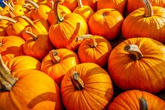 A Truckload of Ripe Pumpkins Royalty Free Stock Photos