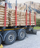 Trucks charged with wood logs waiting for delivery Royalty Free Stock Photo