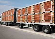Trucks for transporting. Live animals Royalty Free Stock Photography