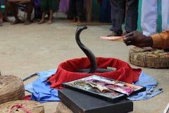 Truco de la serpiente Imagen de archivo libre de regalías