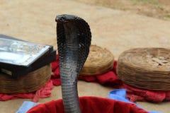 Truco de la serpiente Fotografía de archivo