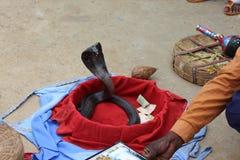 Truco de la serpiente Foto de archivo libre de regalías