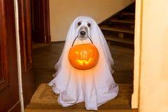 Truco o invitación del perro del fantasma de Halloween imagenes de archivo