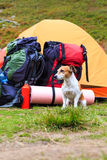 True camping friend Royalty Free Stock Photo