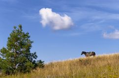 A true and faithful friend. A horse waiting for its rider on the hillside, covered with dry grass under a blue autumn sky Royalty Free Stock Photography