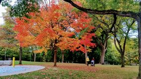True fall colors in a park in Toronto Downtown