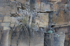 True Grit. A small green plant grows in a crack on a cliff face despite the tough conditions Stock Image