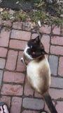 The True Grumpy Cat Stock Photo