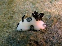 True sea slug Stock Image