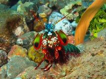 True sea slugs Stock Images