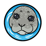 True seal or earless spotted seal Stock Images