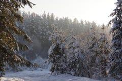 A true Siberian winter. Good morning. Royalty Free Stock Photo