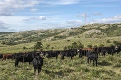 True Uruguay - Windmills, green technologies and livestock Stock Photo