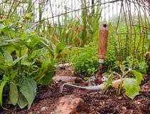 Truelle et transplantoir de jardin Images stock