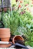 Truelle et usines de jardinage photo libre de droits