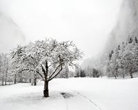 Truemmelbach Falls - Winter. Truemmelbach Falls (Lauterbrunnen, Switzerland) - Winter 2009 Royalty Free Stock Image