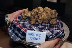 Trufa blanca italiana Foto de archivo libre de regalías
