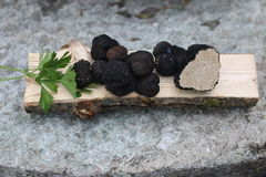 Trufa negra Foto de archivo libre de regalías