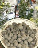 Trufas brancas e pretas em Itália Fotografia de Stock