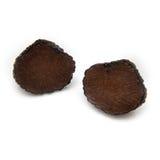 Truffe noire d'été Image stock