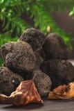 Truffe noire de champignon photo stock