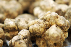 Truffes blanches images stock
