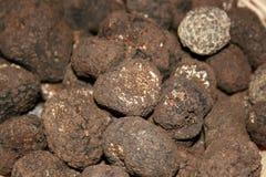 Truffes de champignon de couche Images stock