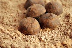 Free Truffle Stock Image - 4060911