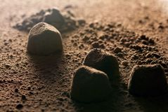 Truffle candies and cocoa powder close-up in hard backlight, similar to the surface of Mars. Background image for Valentine`s Day or for a box of chocolates stock photos