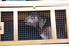 Truffle dog Royalty Free Stock Image