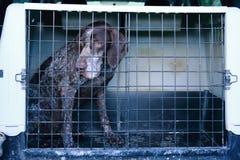 Truffle dog Royalty Free Stock Images